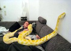 Albino python, not sure what species. --- Looks like a burmese or a reticulated :)