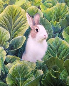 Gallery Website, Cabbage Patch, Fine Art Gallery, Art For Sale, Pets, Bunny Rabbits, Artist, Painting, Animals