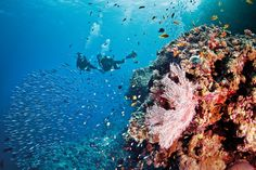 Queensland, Australia: barriera corallina e foreste pluviali