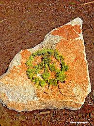 """Tree Moss Peace Offering ~ Walela Dikanogidv """"Songs of the Hummingbird"""""""