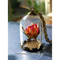 Hey, I found this really awesome Etsy listing at https://www.etsy.com/listing/243727077/real-rose-necklace-terrarium-necklace
