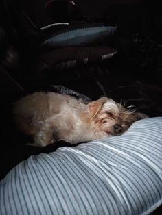 Baby Sleep, Dogs, Animals, Animaux, Doggies, Animal, Animales, Pet Dogs, Dog