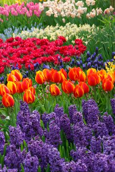 beautfiul flowers pictures for free | Beautiful Flowers Free Stock Photo HD - Public Domain Pictures