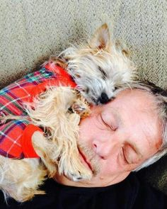 Yorkshire Terrier is one of the most popular dog breeds in the world, and despite their small size, Yorkies have big personalities. Yorkshire Terriers, Cairn Terriers, Funny Dogs, Funny Animals, Cute Animals, I Love Dogs, Cute Dogs, Funny Minion Memes, Most Popular Dog Breeds