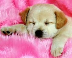Resultado de imagen para perritos lindos y chiquitos y tiernos