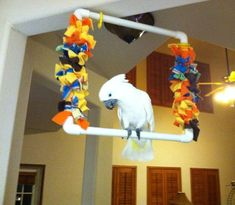 DIY bird/parrot swing - good idea. Maybe add some rope for a better grip.