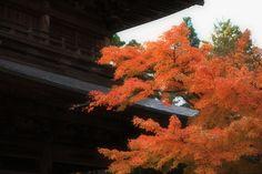 紅葉 北鎌倉 Kita Kamakura autumnal