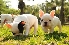 Awwwww babies!