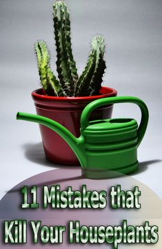 Are you really good at killing your houseplants? Here is a list of 11 ways you could be killing your houseplants. Houseplants are dependent on their soil for nutrients, and may need supplements for optimal health, growth and bloom production. Using a balanced houseplant food on a regular basis...