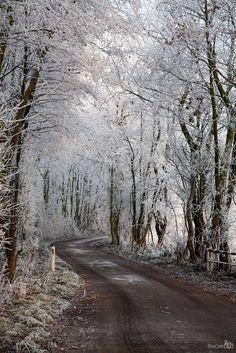Frosty Path (Netherlands) by Bram van Broekhoven