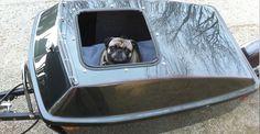 dog-motorcycle-trailer-one-wheel-custom.jpg (1160×600)