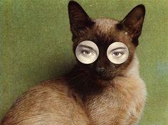 chat sans nom, ma + chr/4 shirin