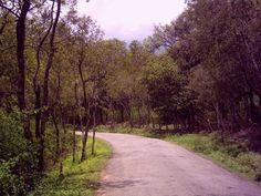 Marayur Sandal forest