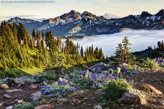"""""""This shot is from last fall near panorama point at 6800 ft and features views of the Tatoosh mountain range with mount Adams off in the distance. Mount Rainier National Park, Mountain Range, Washington State, Skiing, National Parks, Scenery, Wildlife, Mountains, Places"""