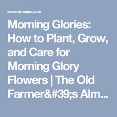 Morning Glories: How to Plant, Grow, and Care for Morning Glory Flowers | The Old Farmer's Almanac