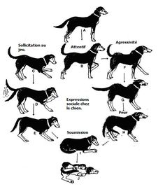 A Visual Guide to Understanding Dog Anatomy With Labeled