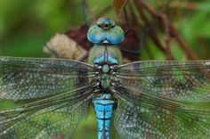 Dragonfly....tattoo!