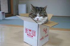 Voor katteneigenaren is het een bekend fenomeen; zet een doos neer en de kat gaat er vaak meteen inzitten. Onderzoekers Claudia Vinke en Ruth van der Leij van de faculteit Diergeneeskunde van de Universiteit Utrecht vroegen zich af waarom katten dit doen. De resultaten van het onderzoek laten zien dat een 'schuildoos' het stressniveau van een kat aanzienlijk kan verlagen.
