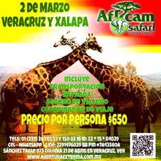 Este domingo nos vamos a #AfricamSafari + INFO http://www.aventuraextrema.com.mx/africamsafari.htm #Veracruz #Xalapa