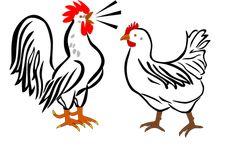 Hane, Høne, Gård, Dyr, Fugle