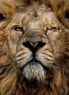 #Lion, fantastic <3