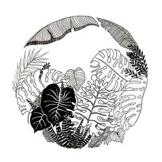 ∆ Jungle ∆ . Quick pen and ink illustration . . #penandink #illustration #jungleillustration #jungle #botanical #micron #artistsoninstagram #arrtposts #art #draw #handmade #blackwork #blackillustration #tattoo