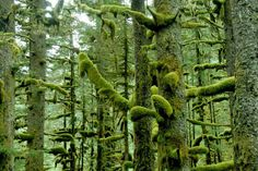 Alaska forest by Elke Dochtermann