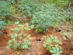 Bildresultat för africa plants vector
