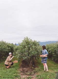 Kinfolk Saturdays: Picking Berries - accomplish a farm chore, and spend time with the community! Digital Art Beginner, Berry Picking, Meadow Garden, Farm Gardens, Country Life, Country Living, Farm Life, Life Is Beautiful, Life Is Good