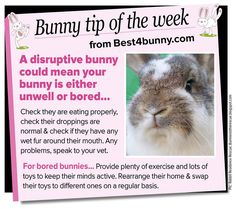 Bunny tip of the week - Reasons why a rabbit is being disruptive www.best4bunny.com