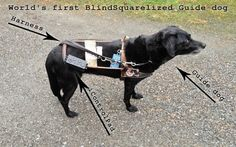 World's first BlindSquarelized Guide dog  via@mashable > Brilliant!