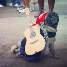 "This Willie Nelson pug won the costume contest at Austin's 2012 Pugapalooza. He had some of those ""funny cigarettes"" stashed in his pocket."