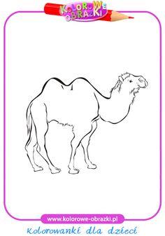Wielbłąd - Kolorowanki zwierzęta