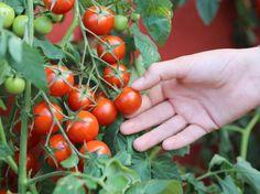 Odla i pallkrage – här är allt du måste veta | Leva & bo Kraut, Farm Life, Garden Art, Garden Ideas, Sustainability, Vegetables, Plants, Gardening, Mars