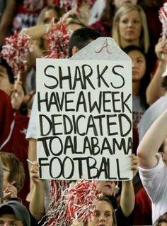 Alabama Shark Week