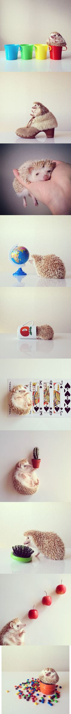 Adorable Photos Of Darcy The Hedgehog...