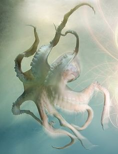 Wonderful octopus :')