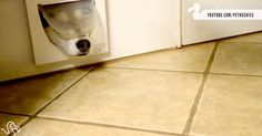 Dogs Using Cat Doors Will Make You Laugh Your Paws Off! | The Animal Rescue Site Blog