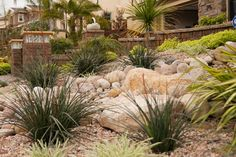 Xeriscaping is extremely popular, especially in Southern California. With rising water costs, many homeowners have turned to xeriscaping to lower their utility bills and reduce their carbon footprint. Xeriscaping entails the creative use of hardscape and native and succulant plants to create a beautiful, low-maintenance, drought-tolerant landscape design.