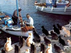 Cats in Greece hoping for fish..