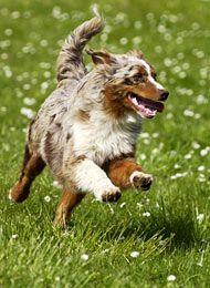 Konsequente Hundeerziehung