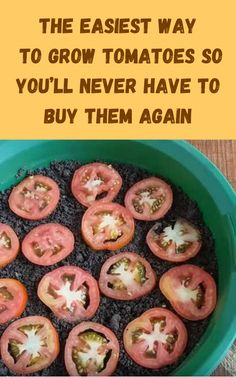 Tomato Seedlings, Tomato Seeds, Tomato Pruning, Tomato Plants, Garden Ideas To Make, Diy Garden Projects, Wood Projects, Planting Vegetables, Growing Vegetables