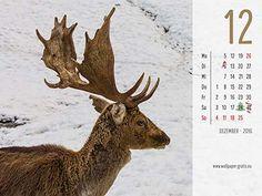 Kalender 2016 Tiere - Dezember