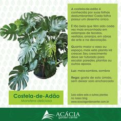 Costela-de-Adão – suas folhas estão sempre na moda | Blog Jardinices Trees To Plant, Plant Leaves, Eco Garden, Succulent Gardening, Replant, Interior Plants, Little Plants, Plant Species, Outdoor Plants