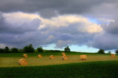 Golden bales of hay drying in the closely cropped meadow, make my heart sing...