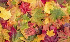 Im Oktober fällt wieder jede Menge Laub von den Bäumen – aber wohin damit? Wir haben die Gartenfans aus unserer Facebook-Community gefragt, wie sie mit der Blätterflut umgehen, und ein paar überraschende Antworten bekommen. Hier ist das Ergebnis unserer kleinen Umfrage.
