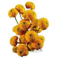 FiftyFlowers.com - Goal Mini Button Pom Yellow Flower