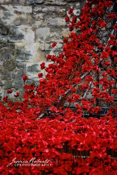 Blood Swept Lands and Seas of Red poppies installation at the Tower of London commemorating the First World War Centenary.
