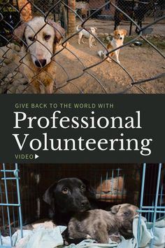 Give Back to the World with Professional Volunteering (VIDEO) - Travel Life Experiences Work Overseas, Golden Retriever Rescue, International Jobs, Volunteer Programs, Work Abroad, Us Travel Destinations, Responsible Travel, Countries To Visit, Giving Back