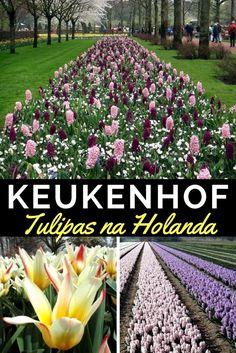 Quer conhecer o parque das tulipas de Keukenhof, na Holanda? Este parque abre apenas por 2 meses durante o ano e jà temos a data de 2017! Veja mais aqui Europe Must See, Places In Europe, Places To Travel, Places To Visit, Packing For Europe, Europe On A Budget, Backpacking Europe, Europe Bucket List, Bucket List Destinations
